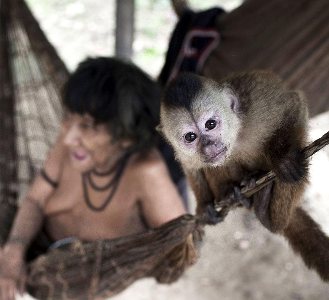 Baby Monkey Breastfeeding Woman