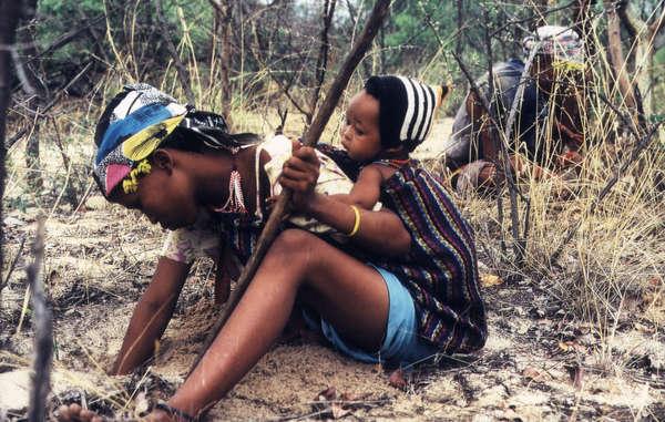 Donne Boscimani raccolgono radici e bacche nella Central Kalahari Game Reserve, Botswana.