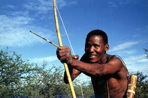 The Bushmen hunt for their survival yet they are accused of 'poaching.'