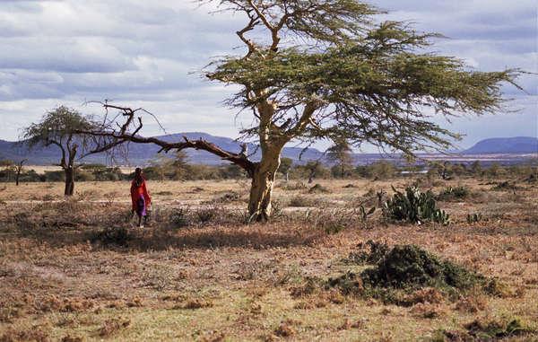 Viele Massai sind in den Ebenen Kenias zu Hause.