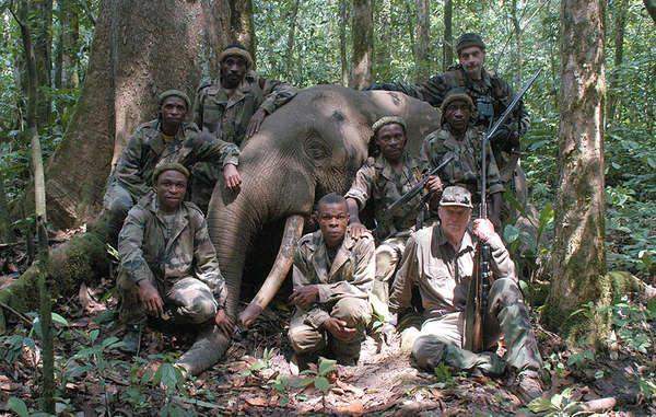 """Peter Flack (vorne rechts), Treuhänder des WWF, mit seinem """"unversehrten Exemplar"""" und Gentile Duquesne (hinten rechts) - letzterer tötete sowohl Elefanten als auch ihre Wilderer."""