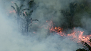 Wildfires in Brazil are often started by loggers as a means of claiming territory and displacing tribes.