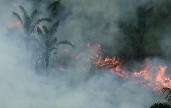 A menudo los incendios forestales en Brasil son iniciados por madereros como un medio para el reclamo del territorio y el desplazamiento de las tribus.