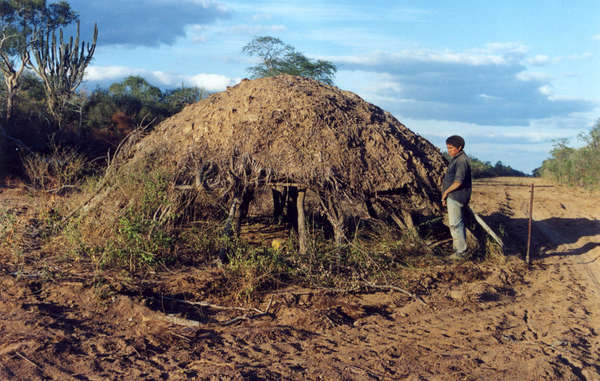 House of uncontacted Ayoreo, discovered when a road was bulldozed through their land. The next day the bulldozer returned and flattened the house.