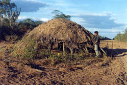 Uncontacted Ayoreo house in the middle of a new road. The Indians abandoned it just hours before, hearing the bulldozer approach.