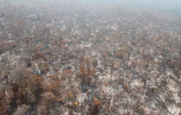Vast swathes of forest in Arariboia have been destroyed by illegal loggers and by fires which the authorities have failed to contain.