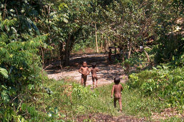 Pirahã boys playing in the forest, Amazonas state, north-west Brazil. The small Pirahã tribe will be affected by the Madeira river dams, as they depend upon the forest and river for their homes, livelihood and lives.