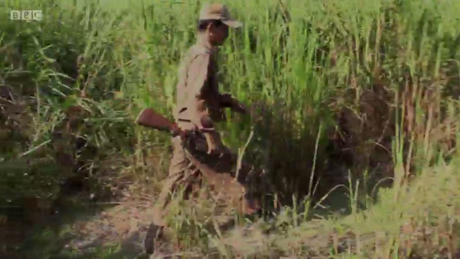 Five things the BBC didn't tell you about Kaziranga
