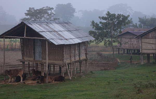 Molte persone dentro e intorno a Kaziranga furono trasferite lì dagli Inglesi per lavorare nelle piantagioni di té. Oggi rischiano sfratti, trasferimenti e frequenti abusi da parte dei guardaparco.