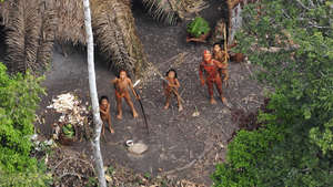 CONTACT: uncontacted Indians emerge, illegal logging blamed
