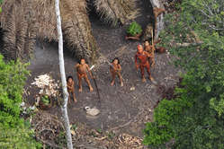 """ Illegal logging in Peru's Murunahua reserve is pushing the Indians into Brazil – the very area where this tribe lives."""