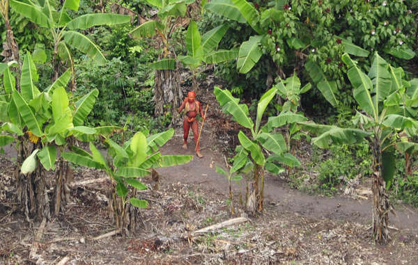 Uncontacted tribal man pictured from the in air 2010 in film footage which subsequently went viral around the world.