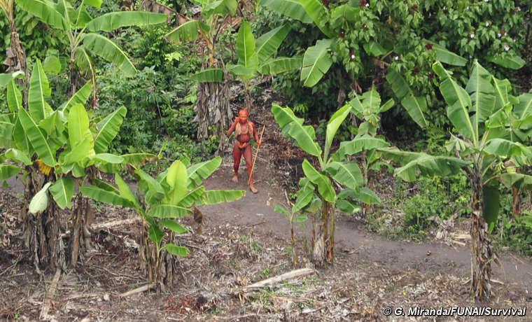 Un hombre, pintado con tinte de la semilla de annato, en el huerto de una comunidad no contactada, rodeado de plataneros y árboles de annato.