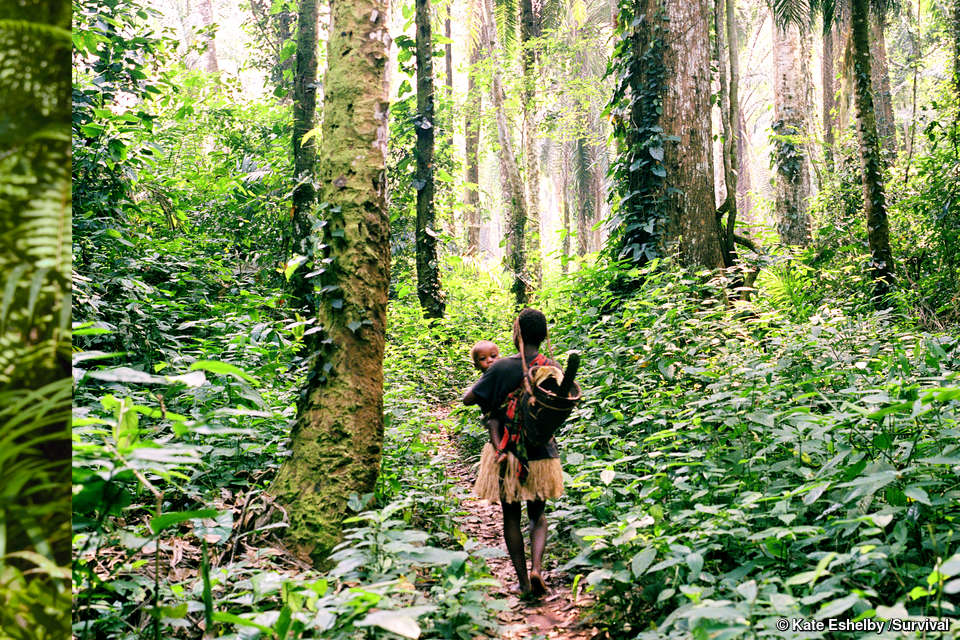 Tribal Conservationists In The Congo Basin Survival