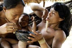 Actualmente la población de los zo'é se ha estabilizado, tras las devastadoras epidemias que los asolaron en la década de los años ochenta.