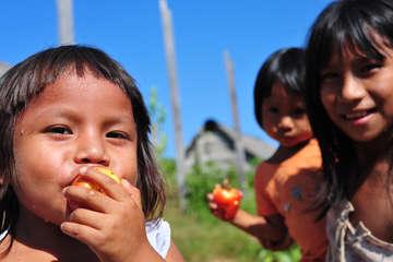 Awajún-Kinder essen Obst im Norden Perus