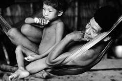 The Yanomami are the largest relatively isolated tribe in the Amazon