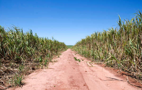 The current boom in sugar cane production is taking over the Guarani's ancestral land, which used to total some 350,000 square kilometers in Brazil.