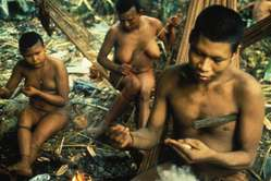 Nukak preparing darts for blowpipe.