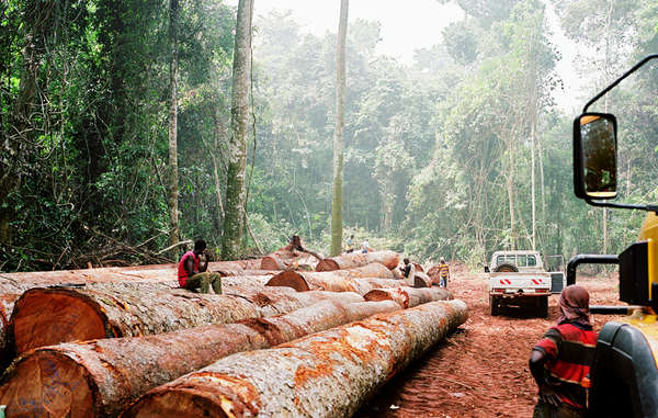 Big conservation has failed to prevent widespread logging on tribal land, and has actively contributed to serious human rights abuses.