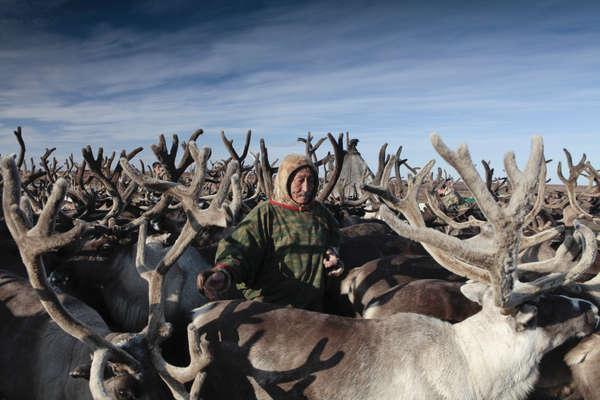 Pastor de renos. Península de Yamal, Rusia.