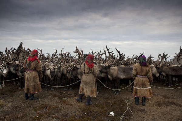 Pastores de renos nénets, península de Yamal, Rusia.