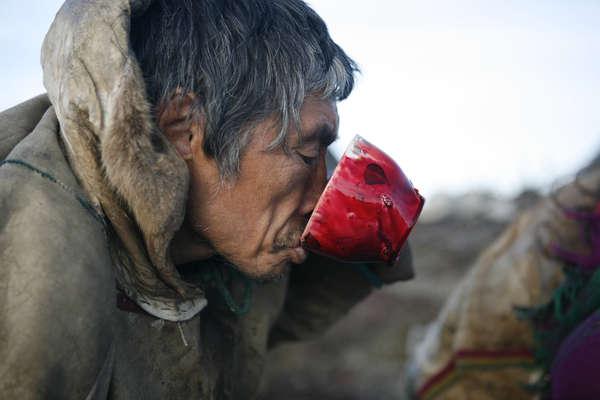 Nenet herder drinking reindeer's blood. Yamal Peninsula, Russia.