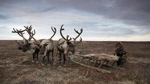 Nenets-0429_300_wide
