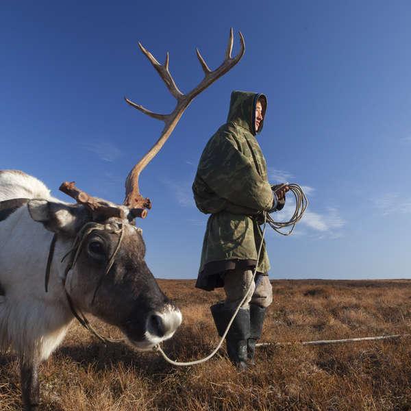 Pastor de renos nénets. Península de Yamal, Rusia.
