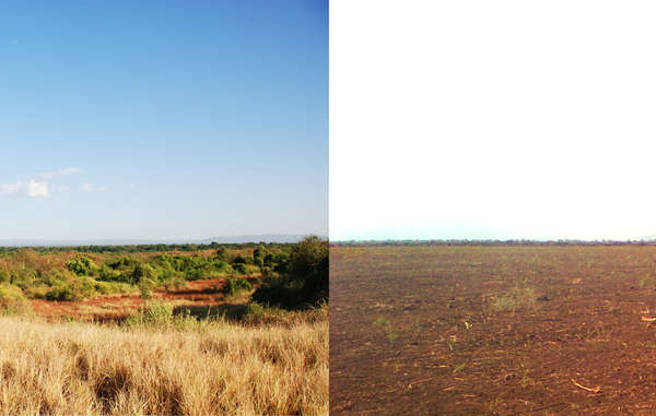 """The forests and savannah of the Omo valley (L) are being cleared for plantations (R)."""