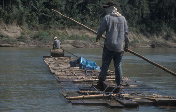 Logging in Madre de Dios, south-east Peru.
