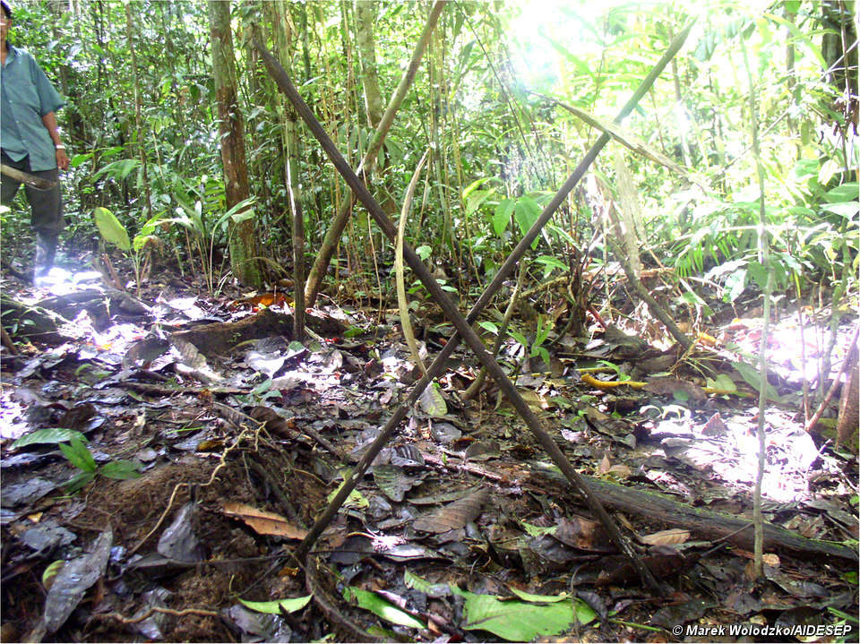 """Crossed spears found on a path in northern Peru, in the region where oil company Perenco is working. Crossed spears are a common sign used by uncontacted Indians to warn outsiders to stay away. © Marek Wolodzko/<span class=""""caps"""">AIDESEP</span>"""