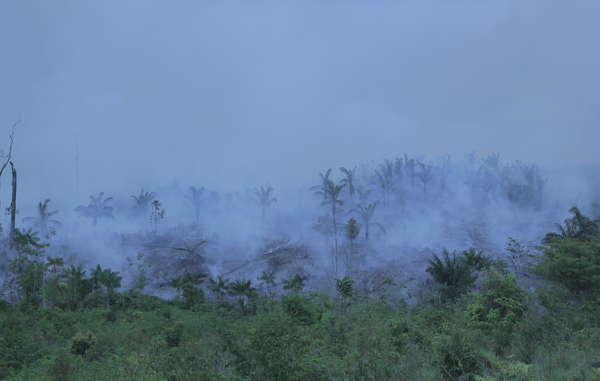 """The fire threatens to completely destroy the uncontacted Awá's forest home (file photo). """