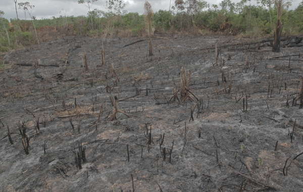 """Evicting tribal peoples from their land has led to massive deforestation around the world. """
