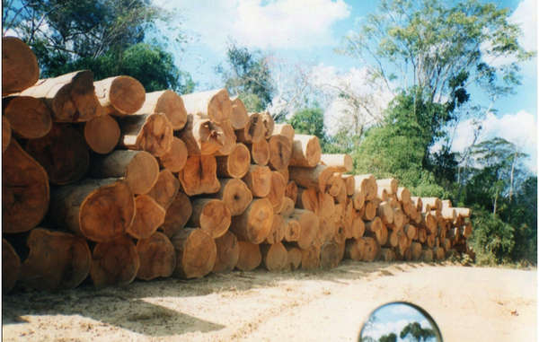 Illegal logging is already rampant along the route of the proposed road.