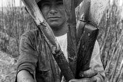 Guarani mit Zuckerrohr und Werkzeugen.