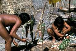 Hombres enawene nawe cocinan pescado en su comunidad.
