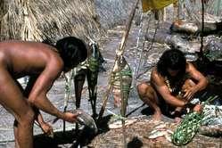 Enawene Nawe men smoke fish to preserve it for the yãkwa ritual.