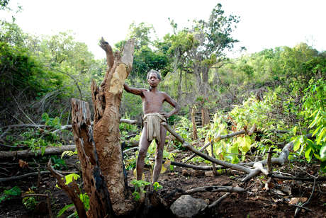 Kolu a tribal shifting cultivator stands over his recently cleared plot on the lower forested slopes of southern Orissa.  Shifting cultivation has been a sustainable practice of the tribes for hundreds of years.