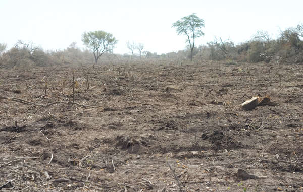 """Much of the Ayoreo Totobiegosode land is being deforested by ranchers."""