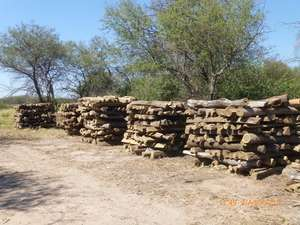 Hardwood logs illegally felled by Carlos Casado on Ayoreo land.