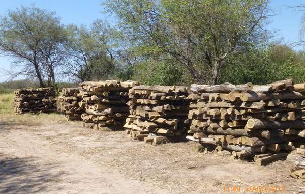Hardwood logs illegally felled by Carlos Casado ready to be turned into fenceposts.