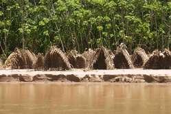 Cabañas de pesca de los indígenas aislados localizadas en la orilla del río,  sudeste de Perú, 2008.