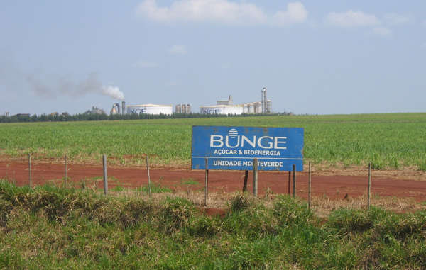 """Bunge is buying sugarcane from land claimed by the Guarani."""