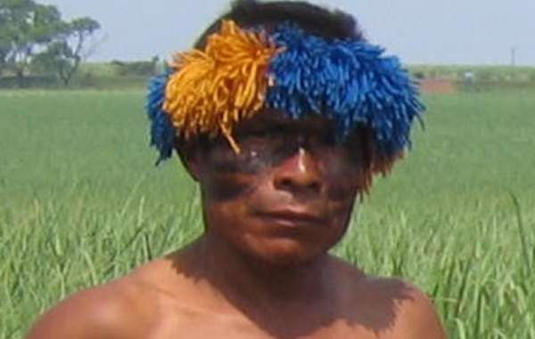 A Guarani man in front of sugarcane crops, grown where the tribe's forests once stood.