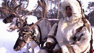 Rus-kha-js-khanty-reindeer-17_300_wide