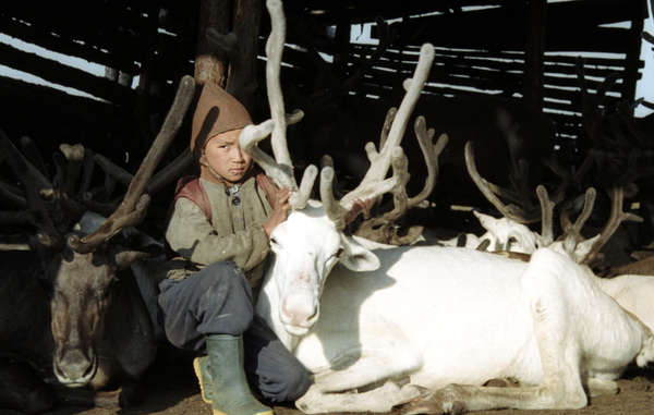 An Evenk boy with reindeer in Siberia.