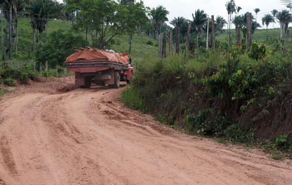 """Logging trucks laden with timber leave the Awá's forest day and night."""
