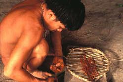 Ein Yanomami stellt eine Halluzinogen her.