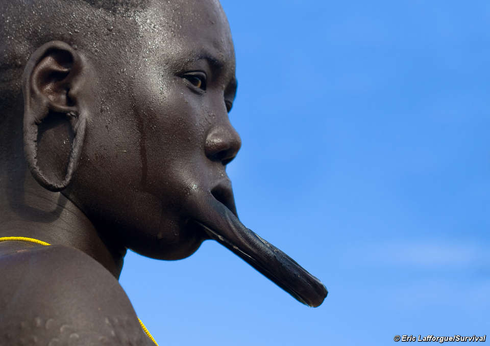 El plato labial de esta mujer mursi, que posa de perfil, sobresale enormemente. © Eric Lafforgue/Survival